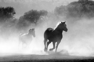 horse-herd-fog-nature-52500