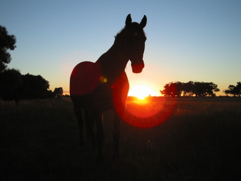 Horse_Against_A_South_Gisborne_Sunrise