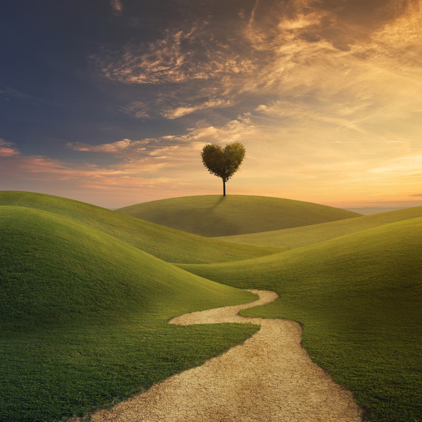 Beautiful-scenery-heart-tree-Stock-Photo-05.jpg