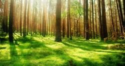 beautiful_forest_scenery-wallpaper-2880x1800-620x330