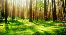 beautiful_forest_scenery-wallpaper-2880x1800-620x330