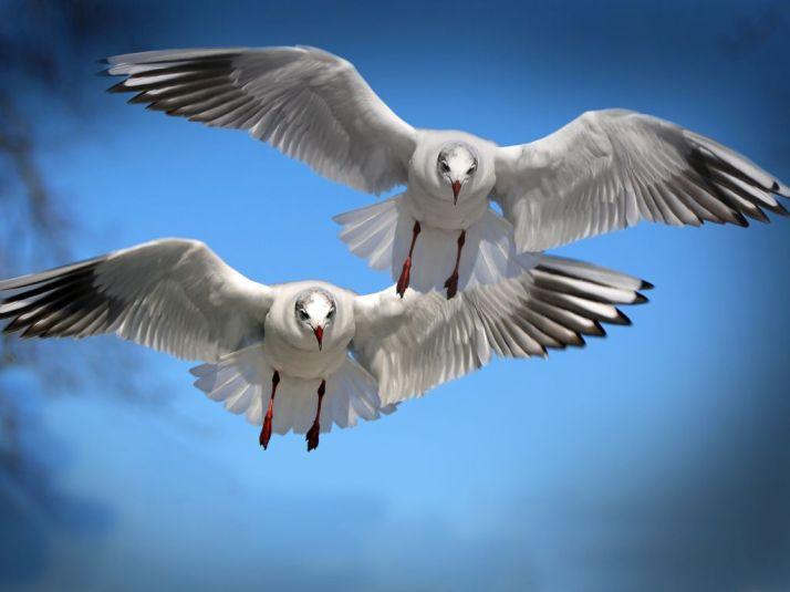 beautiful-birds-flying-wallpaper-1024x768-wallpaper