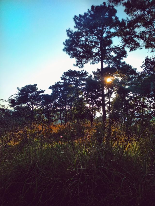 forest-mother-nature-sun-1117722