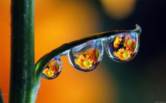 drops_dew_colorful_reflection_49978_1680x1050